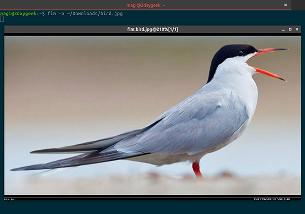 如何在 Linux 终端查看图像